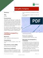 Ficha Aspergillus Fumigatus