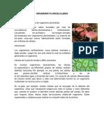 ORGANISMO PLURICELULARES