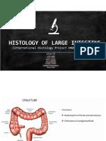 large intestine.pdf