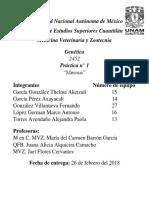 Genética 1° Reporte Meiosis