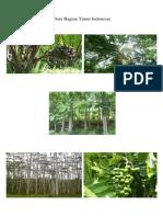 Flora Bagian Timur Indonesia