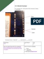 cytogenetics report for g-banded karyotype