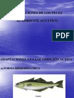 CCD0DF09-743-PECES