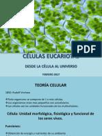 Clase Células Eucariotas