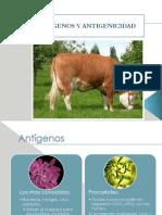 Antígenos-y-antigenisidad[2]