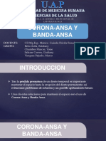 Corona Ansa y Banda Ansa