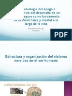 Neurobiología del apego PETALES.pdf