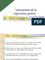 Mecanismo_de_expresion Génica y Código Genetico