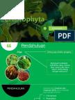 Chlorophyta.pptx
