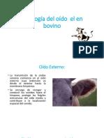 Fisiología Del Oído Bovino