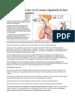El Recorrido Del Aire en El Cuerpo Siguiendo La Fase Pulmonar y Sanguínea