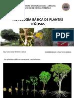 2.Histología Básica de Especies Arbóreas_DENDROLOGIA I