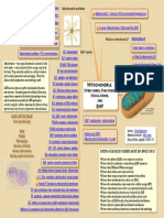 EMF and Mitochondria