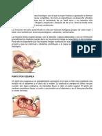 Parto Normal y Cesarea