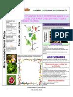 Tablas Plantas y (P.P.A)