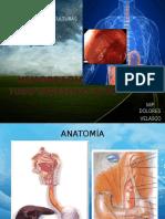203790985-Hemorragia-Del-Tubo-Digestivo-Alto-y-Bajo.pptx