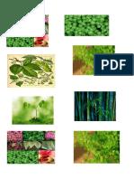 Imagenes Imprimir Reino Plantae