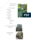 Batang Pohon Merbau