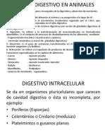 Sistema Digestivo en SERES VIVOS