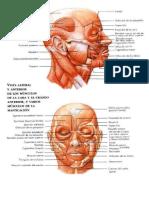 Trabajo de Anatomia 1