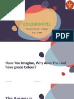 Ppt Chlorophyll