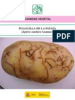 Pulguilla de La Patata Tcm7-232225