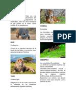 Animales Con Su Nombre Cientifico