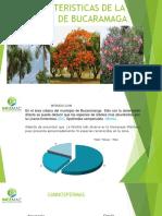 Capacitacion 1 Caracteristicas de La Flora de Bucaramaga (1)