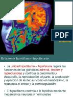 Endocrino2.PDF