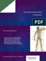 Sistema Nervioso 1 1