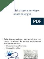 celulasdelsistemanervioso_neuronasyglia