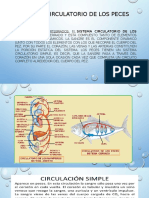 Sistema circulatorio de los peces.pptx 2017 (2).pptx
