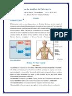Ensayo de Sistema Nervioso Central y Periferico Actualizado