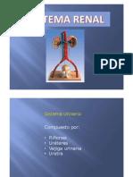 Histologia_RenalIP2017