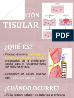 Patologia Reparacion Celular