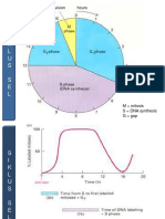 PPT-2 GENETIK (Pembelahan Sell)