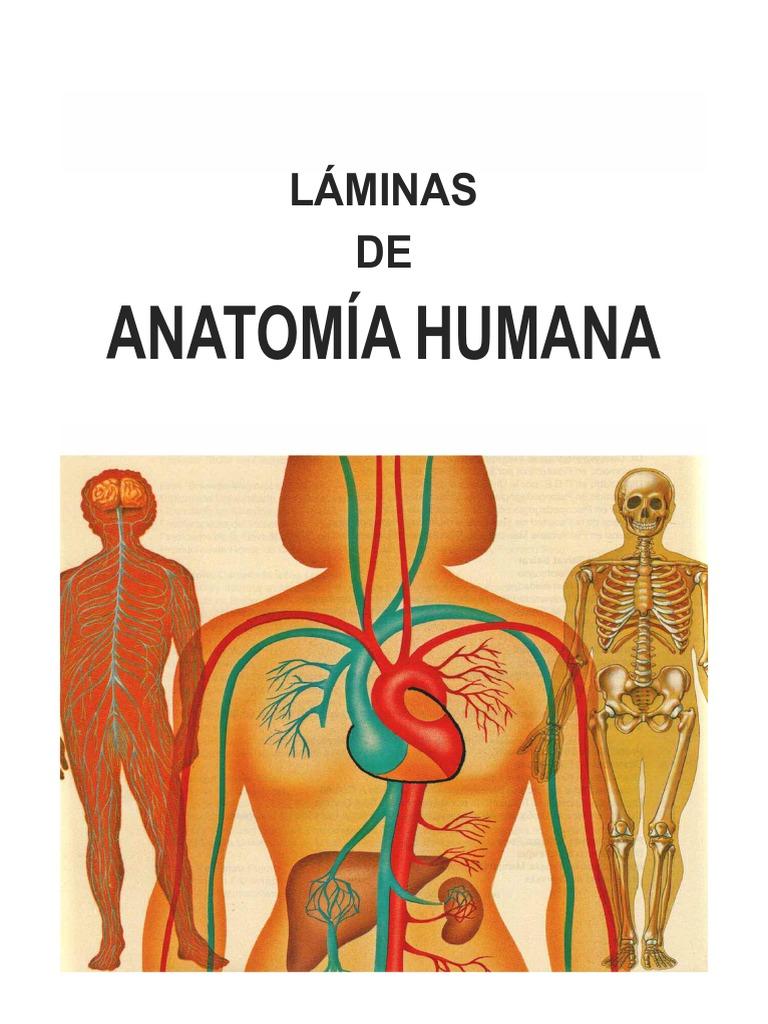Libro01 - Manual de Anatomia y Fisiologia