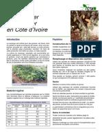 fiche-technique-cacao.pdf