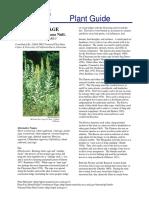 artemisia ludoviciana.pdf