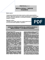 Practica 2 -3 Medula