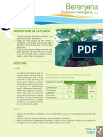 Berenjena. (Solanum Melongena, L.) DESCRIPCIÓN de LA PLANTA ECOLOGÍA CLIMA. Temperaturas Críticas Para Berenjena en Las Distintas Fases de Desarrollo