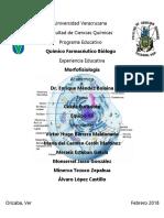 Trabajo Célula Eucariota