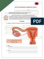 Taller Fecundacion, Embarazo y Parto