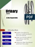 7. Sistem Urinary - Dr Nico