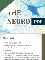 2 VPHY112 Neuron