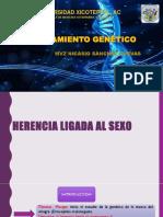 MEJORAMIENTO GENETICO