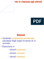 4. Stimoli