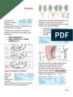 GINECOLOGIA 2EMBRIOLOGIA DEL APARATO REPRODUCTOR FEMENINO.pdf