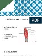 Musculus Quadricep Femoris