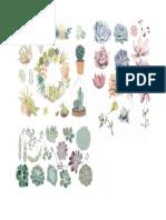 Succulent Pack
